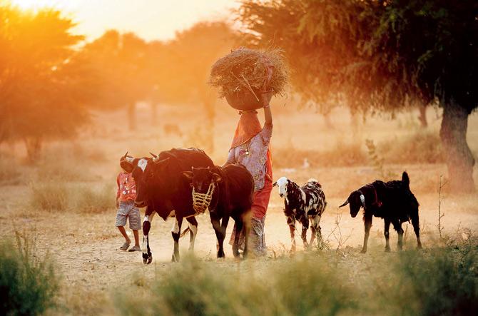rural-india-ascent-futuretech-llp